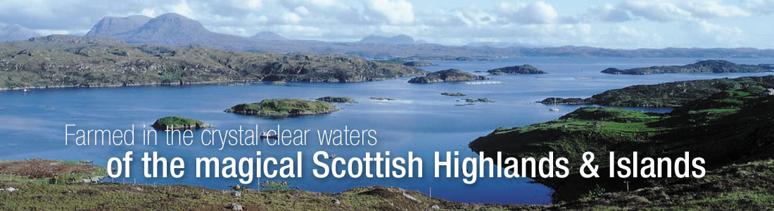 Farmed in the crystal clear waters of the magical Scottish Highlands & islands
