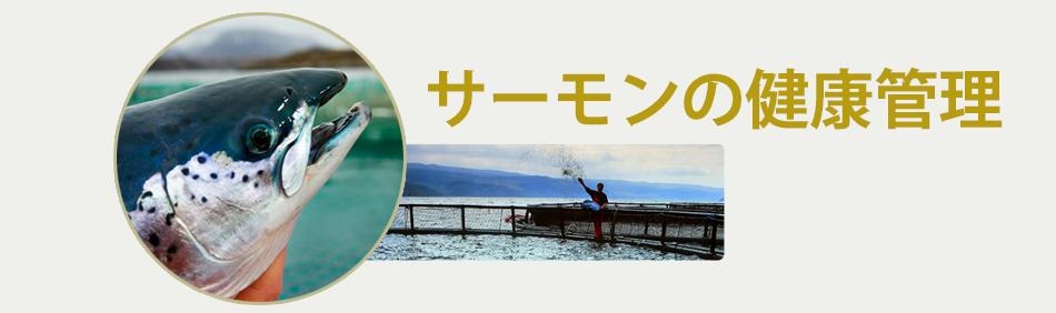 Salmon-welfare