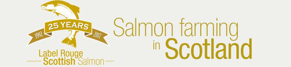 Salmon farming