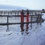 Salmon producers working on a salmon farm