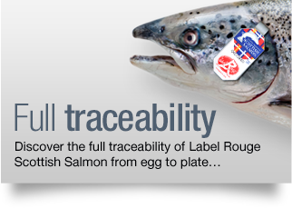 Full traceability